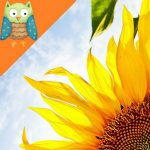 Profile photo of Sunflowerdreams ★