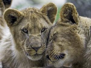 Photo Credit: Tambako the Jaguar via Compfight cc