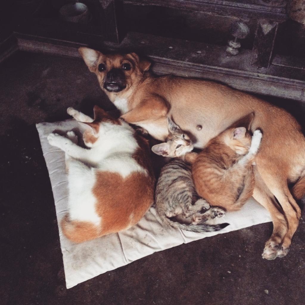 dog and kitties