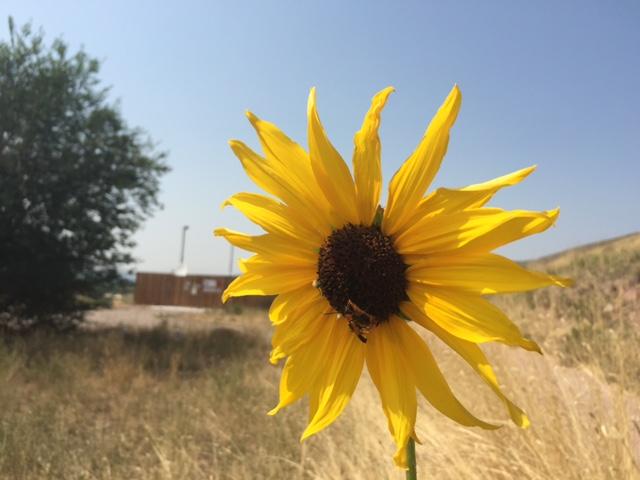 utah flower