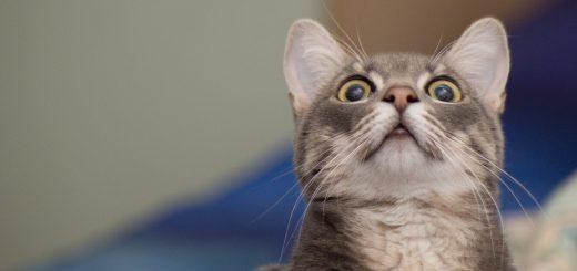 Alarmed-cat-meme-blank